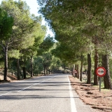 Picture - ShootOutside Film/Photo Location Scout Service Spain Andalusia - Tree lined Road